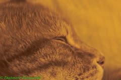 IMG_8858 (mereworld) Tags: cats cat felix felini gatto gatti