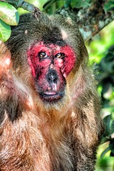Catemaco (Daniela Herrerías) Tags: méxico de mono los lagoon macaco laguna araña veracruz isla catemaco monos