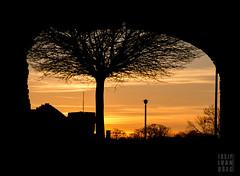 (josip ivanusec) Tags: roof sky orange sun black tree lamp woods osijek croatia