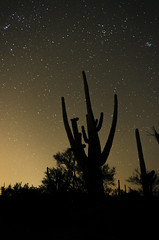 Silhouette Sagauro (wjarizona) Tags: city trees winter light cactus sky mountain lightpainting texture phoenix clouds dark painting stars t nikon outdoor hiking exploring country az dirty pima explore flagstaff astronomy saguaro dslr epic mtlemmon southernaz d5100 wj400m