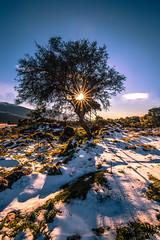 Winter sunset (Vagelis Pikoulas) Tags: winter sunset sun snow tree canon europe day january tokina greece sunburst f28 6d 2016 vilia 1628mm