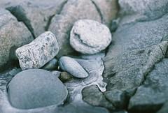 Rocks in Ice (Rachael.Robinson) Tags: winter snow canada color film ice beach nature 35mm outside island rocks fujifilm campobello