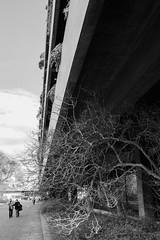 promenade (paulopar.rodrigues) Tags: park street city cidade sky bw tree art architecture arquitectura shadows lisboa sombra cu jardim local rvore gulbenkian fachadas photofoto naturenatureza bairroazul sonya6000 konika28mm