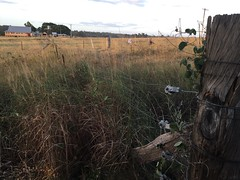 Rural exploration (YAZMDG (16,000 images)) Tags: farmhouse fence post farm details property australia nsw land division grassland grafton fencepost paddock fenceline seelands