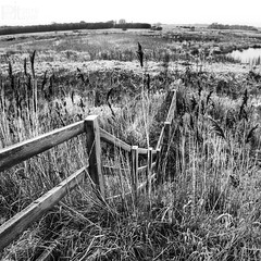 Rushin_About (PJT.) Tags: wood tree reed water fence moss frost post sony meadow meadows lancashire line peat mace lunt bullrush a6000 ilce6000