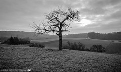 A gloomy Day in early January. (andreasheinrich) Tags: blackandwhite tree germany landscape deutschland moody cloudy january felder fields landschaft baum forests badenwürttemberg blackandwhitephotos bewölkt düster wälder neckarsulm schwarzweis nikond7000
