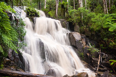 Toorongo Falls (laurie.g.w) Tags: park west fern water forest river waterfall rocks stream reserve falls gippsland toorongo