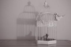 On the Outside Looking In (flashfix) Tags: stilllife ontario canada birdcage monochrome birds paperart nikon origami shadows cardinal ottawa wren 40mm foldedpaper 2016 romandiaz michaellafosse intentionalgrain d7000 advancedorigami nikond7000 2016inphotos february132016