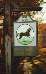 (suzcphotography) Tags: blue sunset horse eye sign canon 50mm paint pretty mare farm gray chestnut quarter gables equestrian equine t3i gelding overo