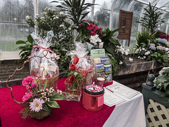 "Conservatory Valentine's Day 2016 • <a style=""font-size:0.8em;"" href=""http://www.flickr.com/photos/130463794@N02/25004302111/"" target=""_blank"">View on Flickr</a>"