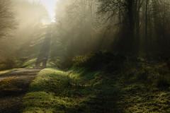 magic world (vieubab) Tags: nature lumire branches hiver arbres paysage extrieur sentier chemin fort goldenhour bois brume calme verdure feuille escapade feuillage troncs atmosphre branchage luminosit levdujour lumirediffuse