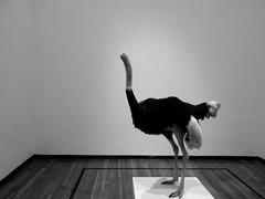 Perder la cabeza (jjpereznunez) Tags: blackandwhite art artistic guadalajara jalisco monocromatic avestruz hospiciocabaas