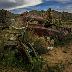 Eclectic collective (Photo's by Peggy) Tags: abandoned car desert catus deserted eclectic