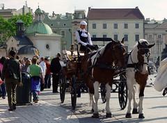Cracovia e la bella cocchiera (Amedeo Cristino) Tags: polonia amedeocristino irotori cracovia città centrostorico carozza donna calesse irotorì