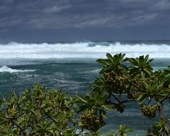 DSC_5362 e5 (J Telljohann) Tags: hawaii maui hookipa