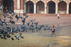 Amazed at Her New Flying Friends (jeff_a_goldberg) Tags: india delhi muslim mosque unescoworldheritagesite unesco newdelhi chandnichowk jamamasjid shahjahan in olddelhi mughal masjidijahnnum