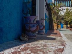 un chat qui fait sa sieste (A.B.S Graph) Tags: ocean music sun mer nid surf tour body sale maroc chateau poisson oiseau peche rabat planche regard canne gnawa pensif salé oudaia oudaya sacrée gnawi