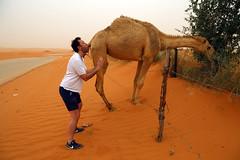 Le pote de Francis est un leche-cul (Dlirante bestiole [la posie des goupils]) Tags: road sand middleeast camel saudiarabia dsert dromadaire francophonie arabie enmarge