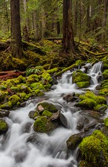 Cascading through the Rain Forest (dezzouk) Tags: washington hoh rainforest cascades olympic olympicnationalpark solduc