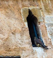 Ni d'oiseau (A.B.S Graph) Tags: ocean music sun mer nid surf tour body sale maroc chateau poisson oiseau peche rabat planche regard canne gnawa pensif salé oudaia oudaya sacrée gnawi