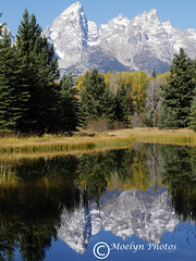 Portrait of Schwabacher Landing in the Grand Tetons (moelynphotos) Tags: autumn reflections snowcapped snakeriver wyoming grandtetons grandtetonnationalpark evergreentrees schwabacherlanding moelynphotos