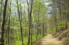 Trkensturz (anuwintschalek) Tags: wood mountain berg forest austria spring path april wald mets niedersterreich beech rada frhling pfad buche beechtrees kevad 2016 mgi trkensturz d7k pk pgimets hiirekrvul nikond7000 pgid hiirekrvad 18140vr