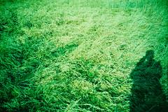 Pasture. (Markus Moning) Tags: shadow film grass analog 35mm austria sterreich lomo lca xpro lomography cross meadow wiese ct pasture processing gras 100 process lc agfa expired rhein processed schatten spitz moning grser vorarlberg precisa flm gaissau at markusmoning rheinspitz gaisau