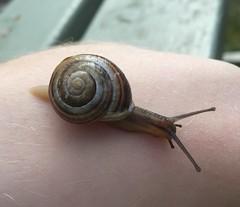 """Slimy"" The Snail (ewar166) Tags: snail slimy"