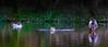 Lovers' Leap (Steve-h) Tags: park camera trees ireland boy wild dublin orange naturaleza brown white lake black green nature water girl birds yellow female bronze canon reflections dark season lens outdoors island eos grey daylight fly flying duck spring pond europa europe day colours bright zoom wildlife air natur flight ducks eu ivy natura iso landing telephoto shade april mating males splash touchdown bushes leap ef drakes mallards splashing bushypark 2016 rathfarnham steveh aquaticbirds wildfown