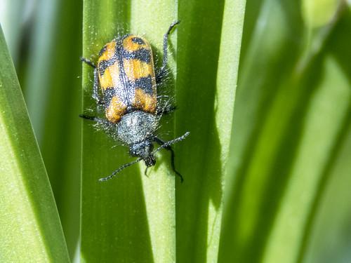 Bug Going Down