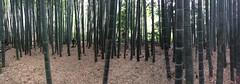 Hkoku-ji (M_Strasser) Tags: panorama japan kamakura bamboo bambus hkokuji