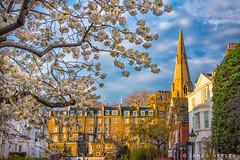 Spring! (James Neeley) Tags: london spring southkensington jamesneeley