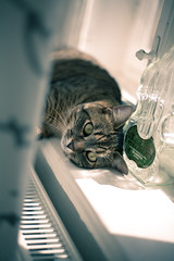 the cozy cat (changhsinhaotw) Tags: cute green home beautiful animal cat cozy eyes sleepy lazy katze brav