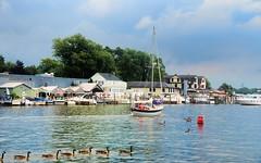 Boating on the Kalamzoo River, Saugatuck Michigan (Gail K E) Tags: usa sailboat michigan lakemichigan waterfowl kalamazooriver nikond7000
