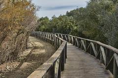 jlvill 373 (jlvill) Tags: naturaleza puentes 1001nights senderos parquesnaturales pasarelas reservas 1001nightsmagiccity
