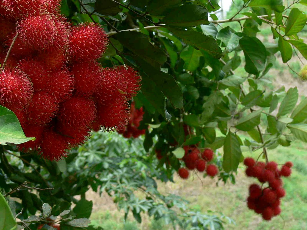 vườn trái cây nhiệt đới