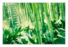 Green Paradise - Gartenparadies (macplatti) Tags: park italy garden paradise bamboo jungle begonia ita andreheller bambus lagodigarda lombardy gardasee begonie gardone gardoneriviera
