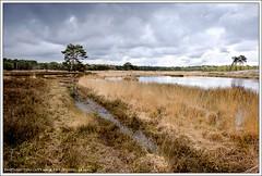 Dreigende luchten boven de Sonse Heide (hypnotixed.com) Tags: water nederland natuur wolken boom lente ven landschap noordbrabant staatsbosbeheer leefilters sonseheide langven