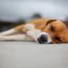 Sleeping Dog, Guatape