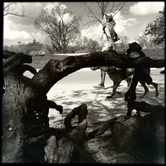 IMG_1656 (Ilona Hipstamatic) Tags: trees netherlands amsterdam fallen vondelpark