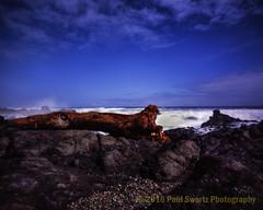 Rocky Beach, Yachats, Oregon (Paul Swortz) Tags: family vacation color film pinhole pacificocean springbreak newport transparency 4x5 oregoncoast e6 yachats 2016 fujivelvia100 swortz harmantitan