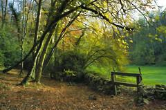 Sturt Copse in Autumn (saffron100_uk) Tags: autumn trees film woodland nikon slide nikonf100 velvia transparency stile oxfordshire pictorial eastend autumntints westoxfordshire sturtcopse hasselbadx5scanner