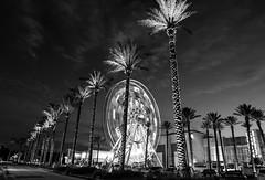 Ferris Wheel & Palms B&W (Ms Stacy) Tags: night lights alabama nightpics thewharf 2016 2015
