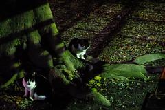 Today's Cat@2016-01-04 (masatsu) Tags: cat pentax cc100 catspotting mx1 thebiggestgroupwithonlycats