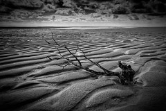 End of Life (azhukau) Tags: sky blackandwhite bw seascape tree beach water monochrome clouds dead sand outdoor branches dunes dramatic shore trunk