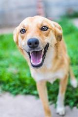 Foxy dog II (Pablo Gorosito) Tags: portrait dog animal animals 35mm nikon focus outdoor retrato perro perros animales nikkor mascota