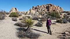 Hiking Jumbo Rocks area in Joshua Tree NP