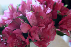 Pink :) (lizdresden) Tags: life pink love nature canon day vase valentines centerpiece