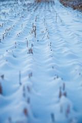 Julgransinsamling2016_MartenSvensson_IMG_7661