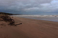 Blowing Sand,Sands of St Cyrus,St Cyrus National Nature Reserve_jan 16_681 (Alan Longmuir.) Tags: aberdeenshire grampian blowingsand stcyrus shiftingsands sandsofstcyrus stcyrusnationalnaturereserve